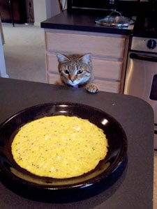 Spinach and Bacon Egg Wraps - the cat