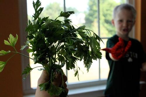 Turnip Parsley Cakes - parsley