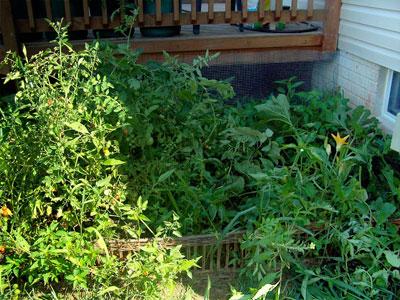 Roni's messy garden